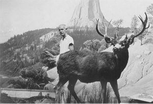 James Perry Wilson in Mule Deer diorama at the American Museum of Natural History, 1943. Photograph by Thanos Johnson